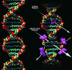 Cosmic Radiation and DNA.